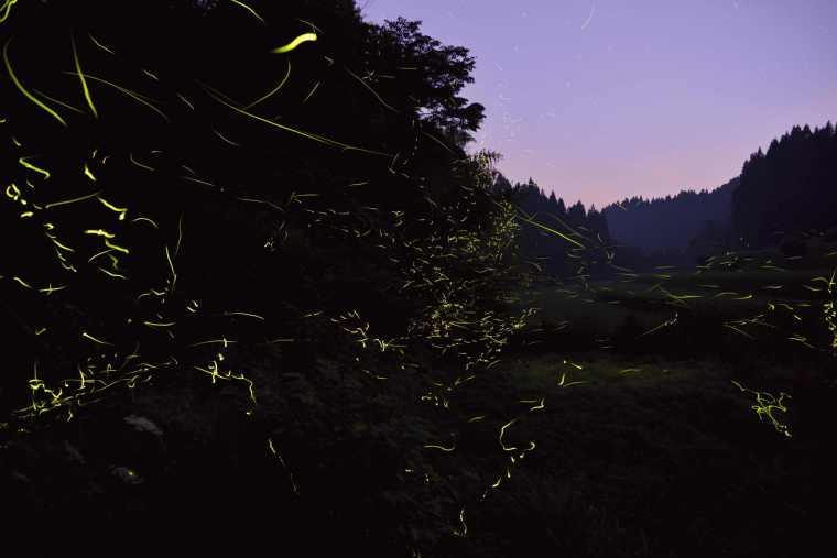 黒川温泉 「ホタルが棲む夜の里山見学」