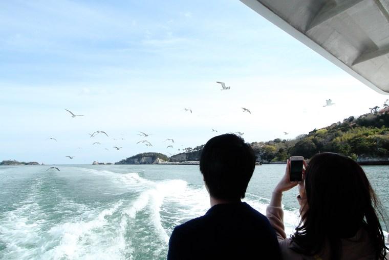松島 ウミネコ
