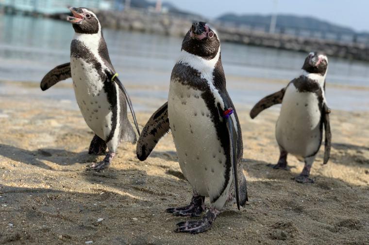 長崎ペンギン水族館のペンギンたち