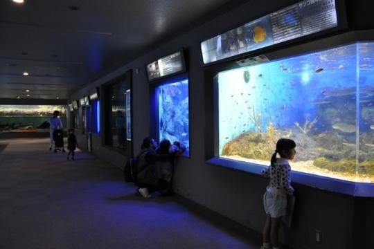 熱帯魚などが飼育されている