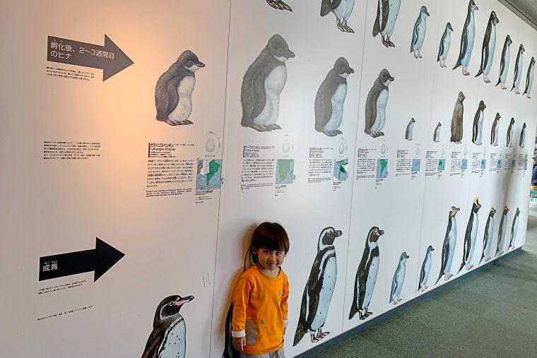 ペンギン情報室