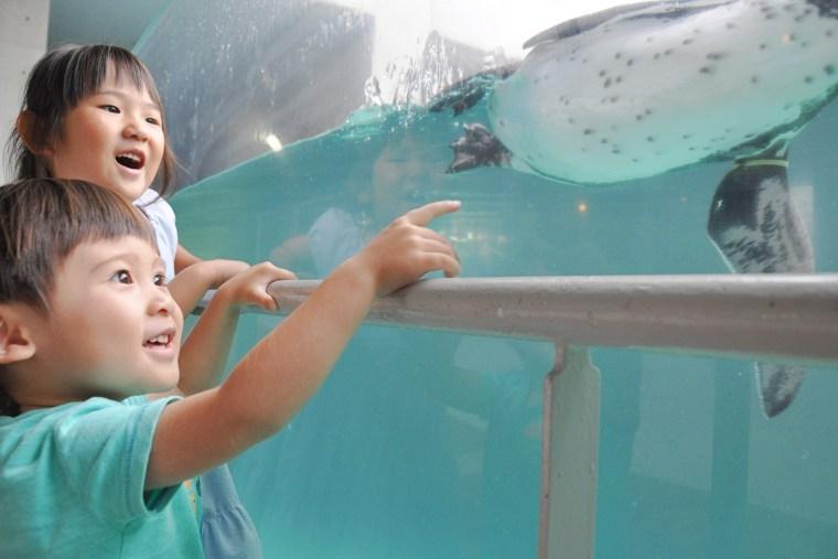 子どもたちが楽しめる長崎ペンギン水族館