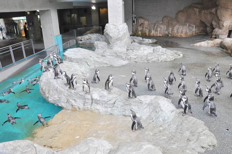 温帯ペンギンゾーン