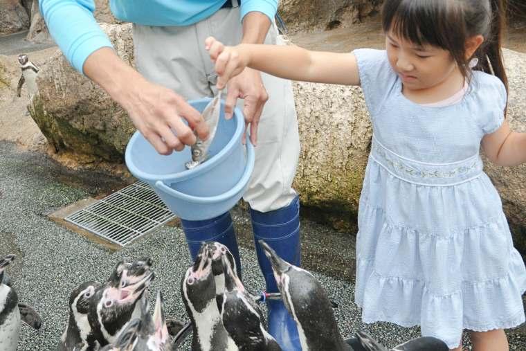 ペンギンのエサやり体験