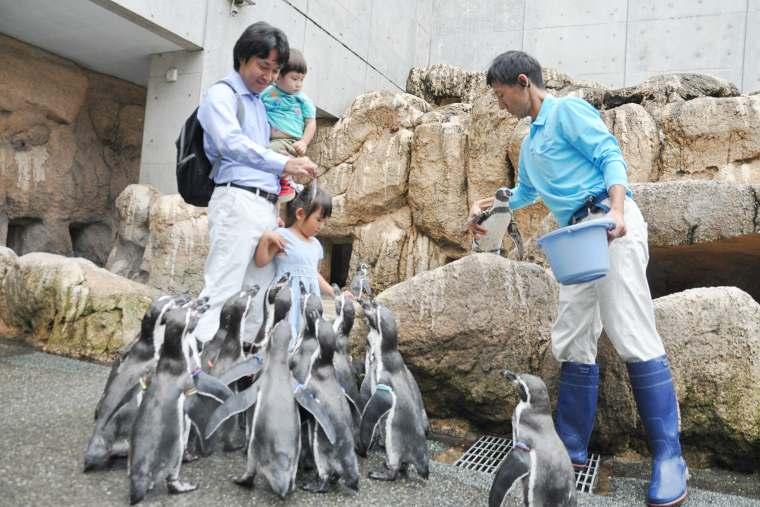 ペンギンたちがエサを求めて寄ってくる