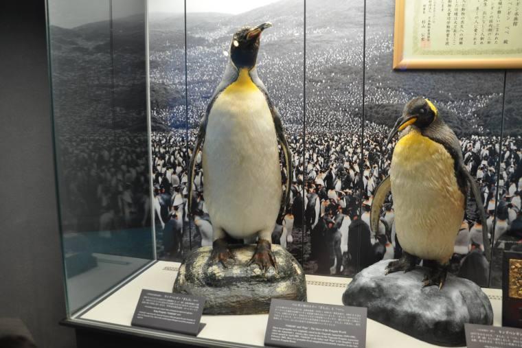 ペンギン「ぎん吉」のはく製