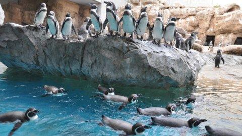 長崎ペンギン水族館で約170羽ものペンギンと親子で触れ合おう!