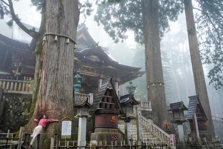 秩父 三峯神社 神木