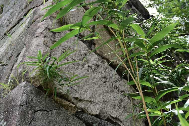 名古屋城 石垣の刻紋