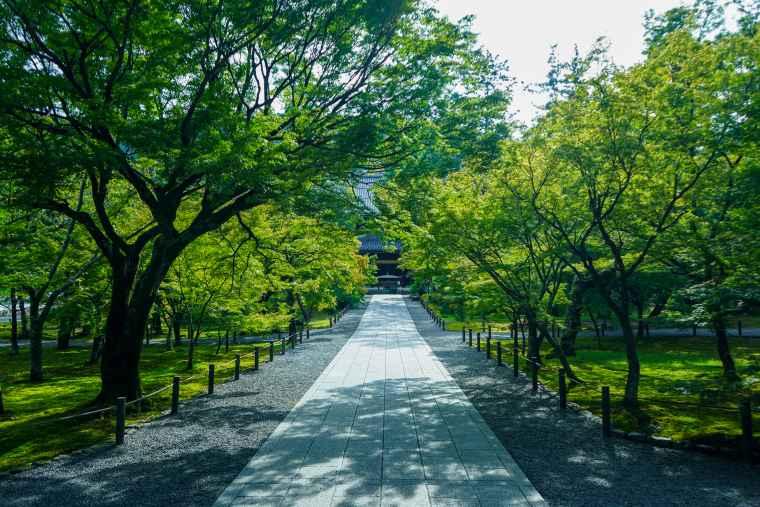 京都 南禅寺 法堂 紅葉スポット