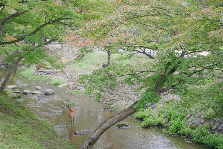 歴史公園とも言われている奈良公園