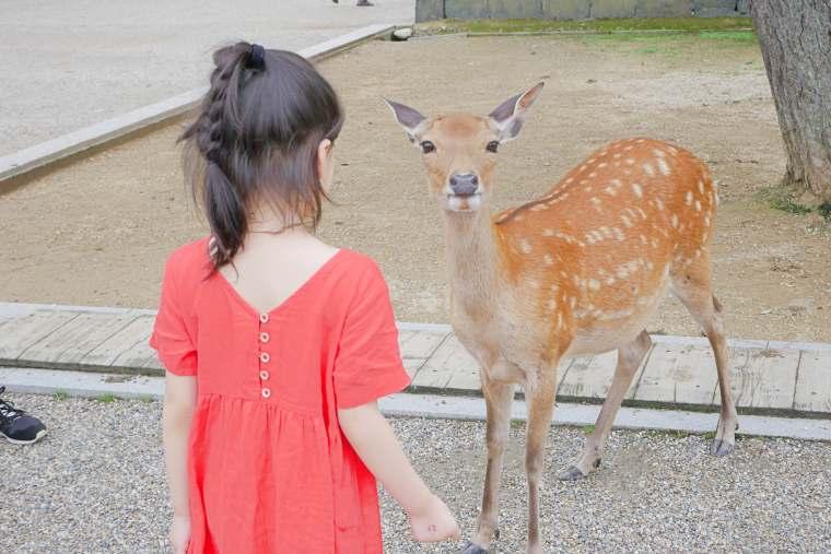 群れ遊んでいる奈良公園の鹿たち