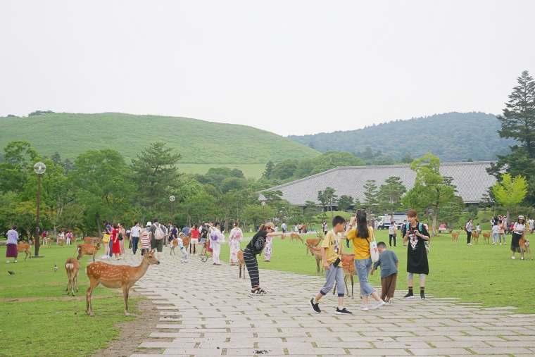 敷地には緑が広がる奈良公園