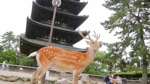 おすすめ奈良公園周遊コース!かわいい鹿たちやおいしいグルメに癒される