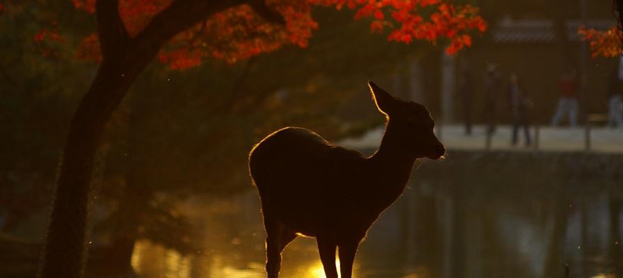 敷地内で出会える!野生動物バスツアー