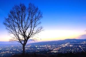 若草山からの夜景を堪能できるロマンチックツアー