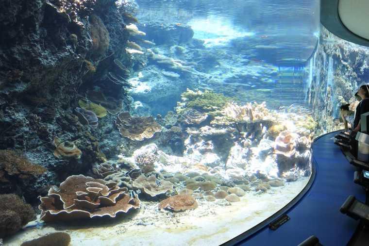 沖縄美ら海水族館 サンゴ礁への旅