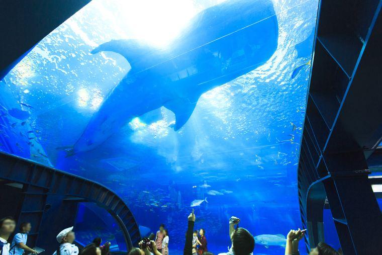 沖縄美ら海水族館 黒潮の海