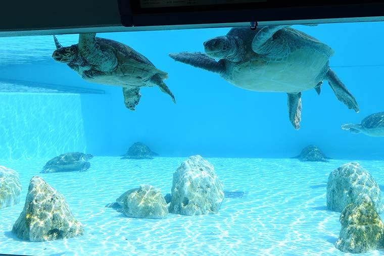 海洋博公園 ウミガメ館