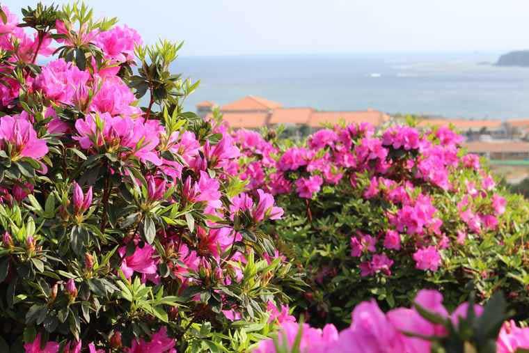 沖縄避粉旅行のすすめ 花祭り