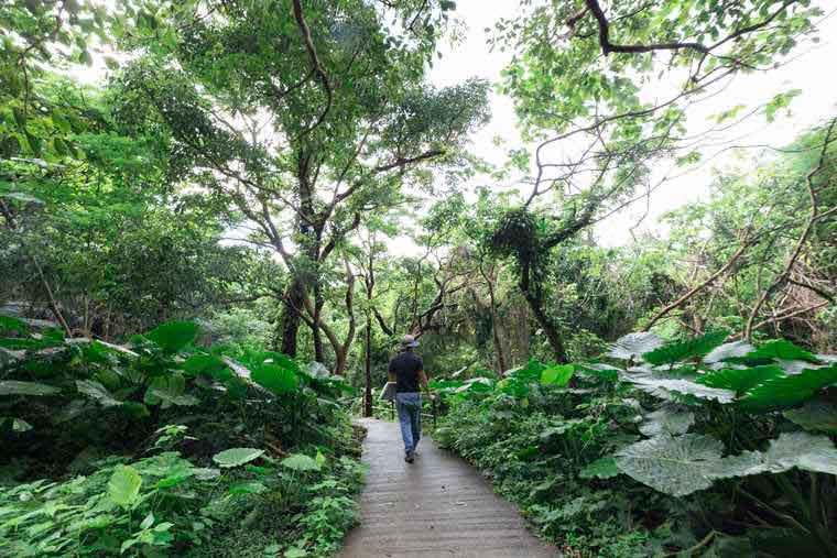 沖縄パワースポット ガンガラーの谷
