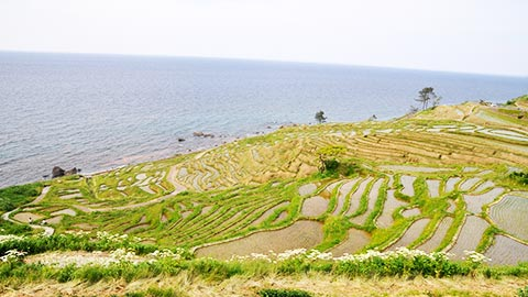 石川・奥能登絶景海道をドライブ!里山里海の絶景と塩グルメ