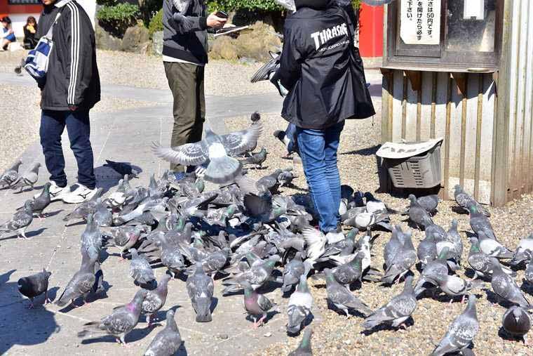 大須観音 境内のハト