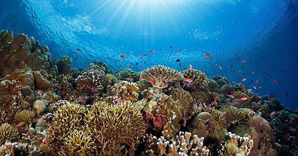 【おうちで海外気分】旅行ガイド:フィリピン・セブ島