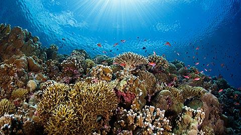 島の数ほど魅力がいっぱい!フィリピンでやってみたい10のこと