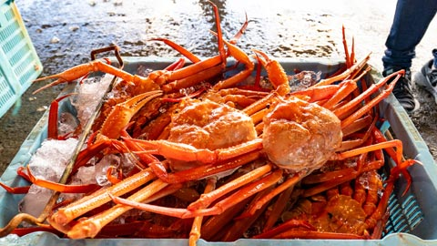 紅ズワイガニ水揚げ日本一!鳥取・境港でかにを喰らいつくす