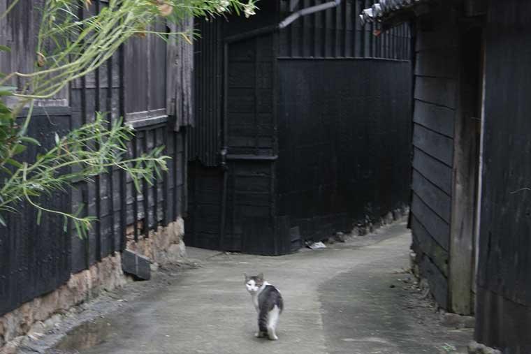 佐久島 ねことじいちゃんに登場した猫