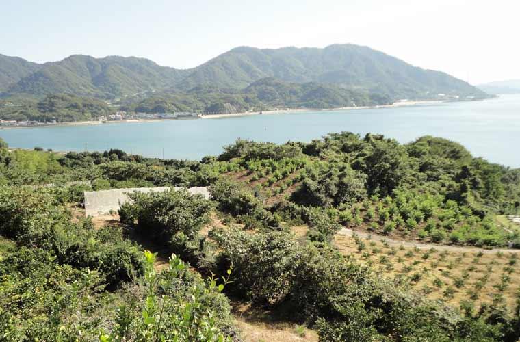 瀬戸田水道を挟んで向こう岸に見える生口島