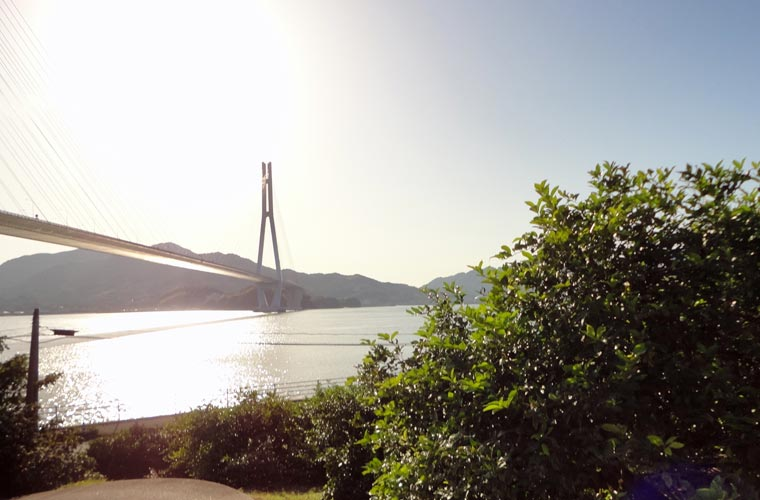 瀬戸内海に広がるレモン畑と多々羅大橋のコントラストが美しい絶景