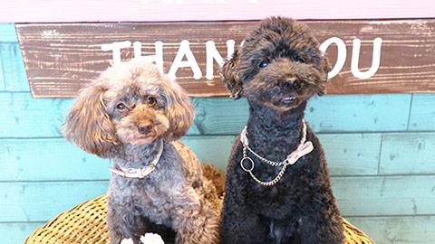 ペットとの旅行に!愛犬と一緒にシェラトン・グランデ・トーキョーベイ・ホテルへ行こう
