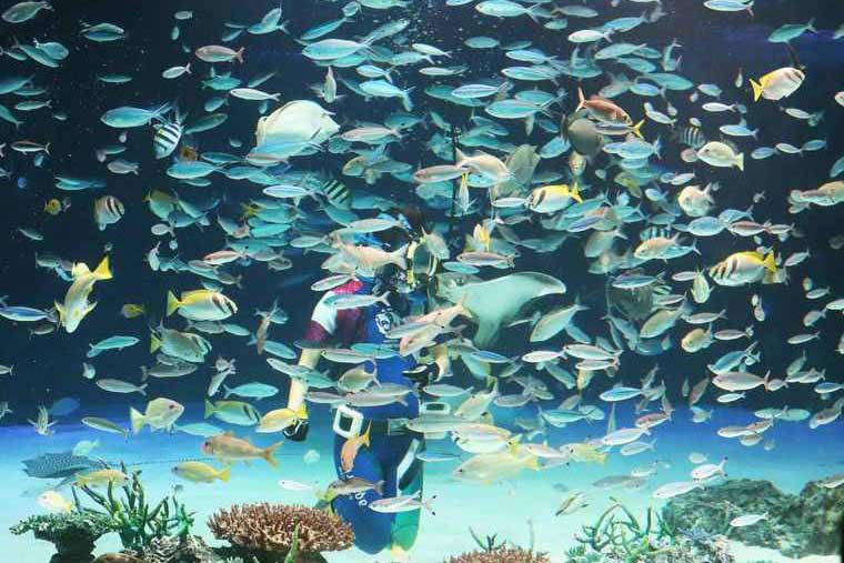サンシャイン水族館 「サンシャインラグーン」 水中パフォーマンス