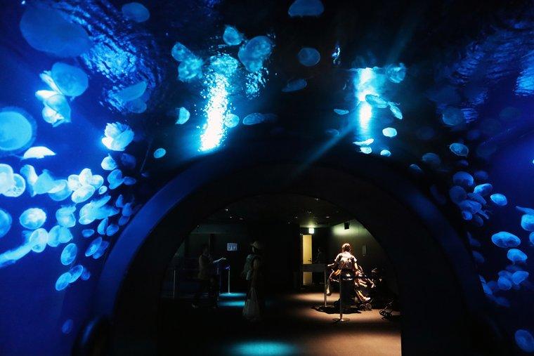 サンシャイン水族館 大海の旅 クラゲ展示「ふわりうむ」