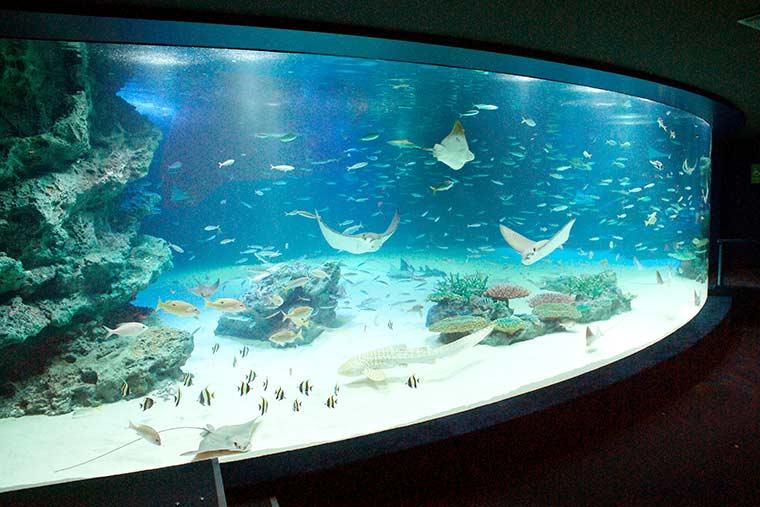 サンシャイン水族館 大海の旅 「サンシャインラグーン」