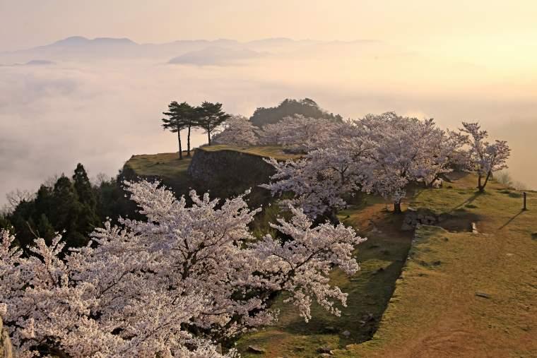 竹田城 雲海 桜