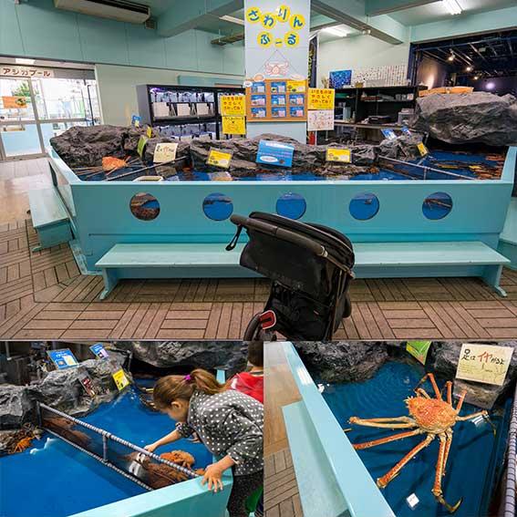 竹島水族館 タッチプール