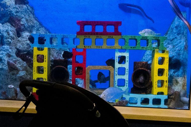 竹島水族館 カサゴとイタチウオの水槽
