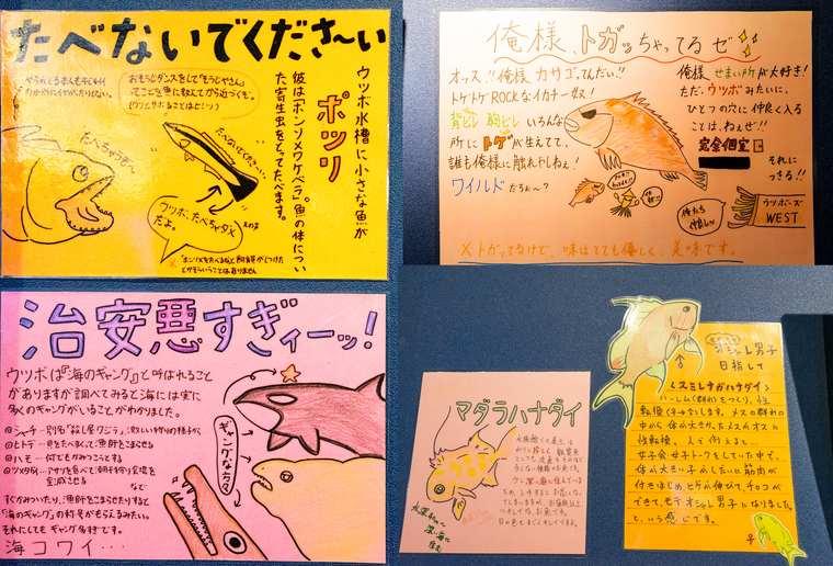 竹島水族館 シュールな手書き解説ポップ