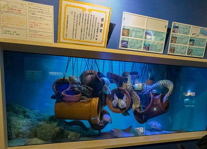 竹島水族館 ウツボの水槽