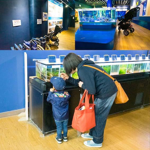 竹島水族館 子どもにも優しい館内設計