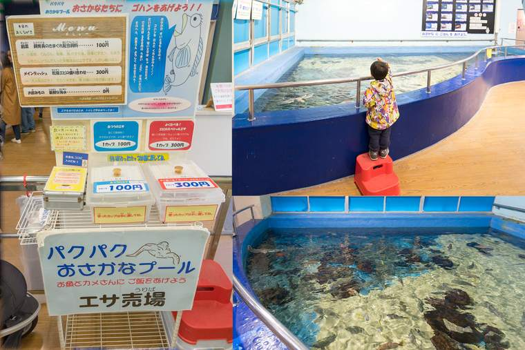 竹島水族館 パクパクお魚プール