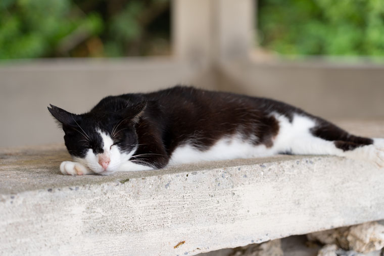 コンドイ浜で寝ている猫