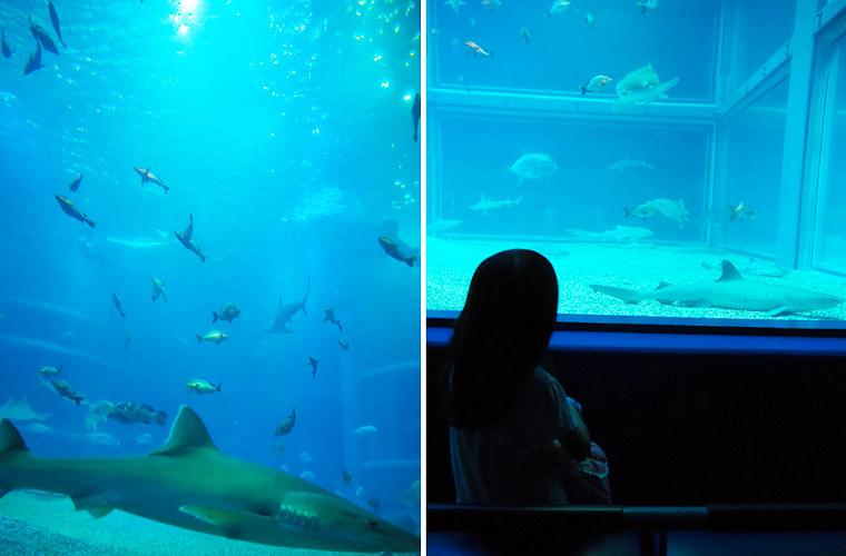 海遊館の水槽の中の魚たちを眺めることができるスポットも