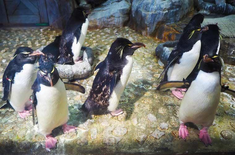 手が届きそうな距離にペンギンが