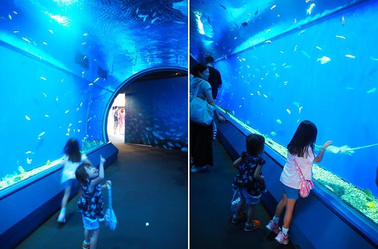 海遊館の「魚のとおりぬけ・アクアゲート」