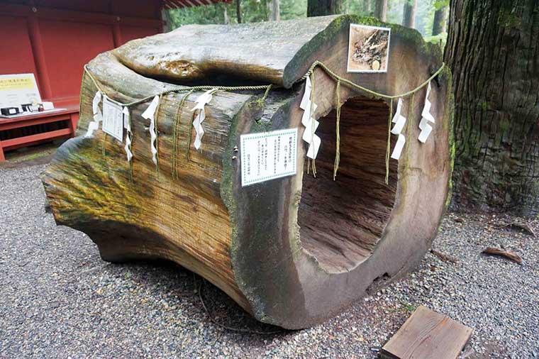 日光東照宮 二荒山神社 樹齢約550年のご神木