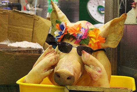 サングラスの豚